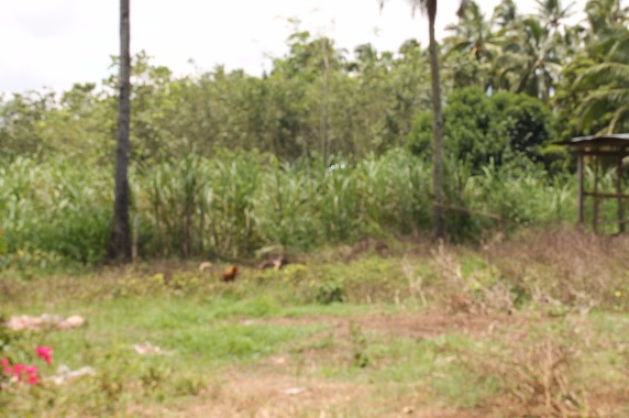 LOT FOR SALE (RESIDENTIAL/AGRICULTURAL) image 4