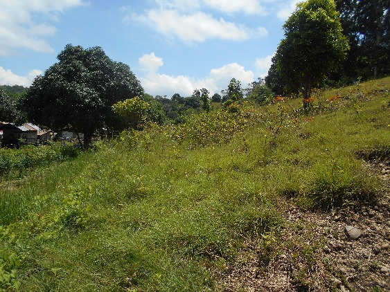 LOT FOR SALE (RESIDENTIAL/AGRICULTURAL) image 2