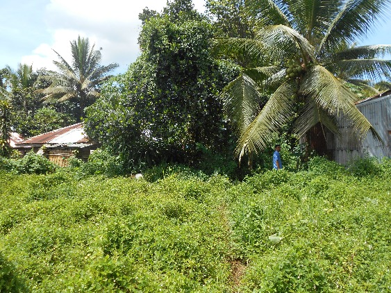 LOT FOR SALE (RESIDENTIAL/AGRICULTURAL) image 3